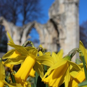 Daffodils in front of St Mary