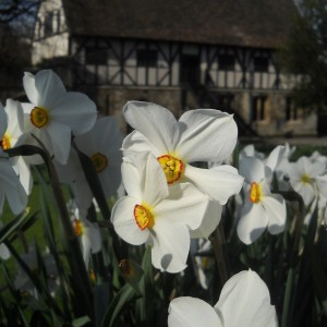 Narcissus and The Hospitium