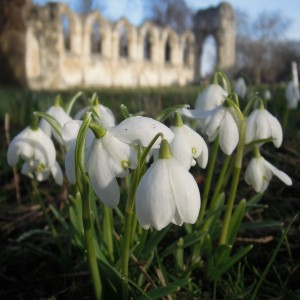 Snowdrops and St Mary